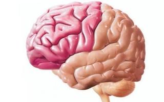 Функции лобных долей головного мозга человека