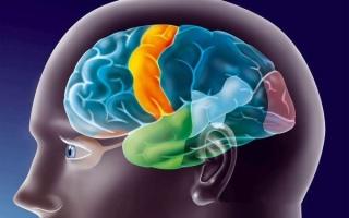Что такое ирритация коры головного мозга