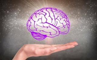 Как работает человеческий мозг
