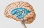 Желудочковая система головного мозга