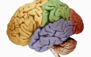 Зоны головного мозга и их функции