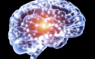 Что такое нейропластичность мозга