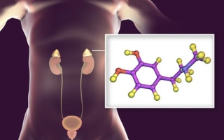 Биохимия синтеза адреналина