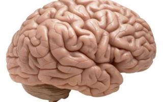 Функции борозд и извилин головного мозга