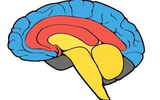 Неокортекс – новая кора головного мозга