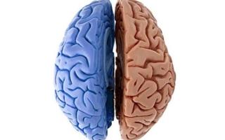 Функциональная межполушарная асимметрия мозга