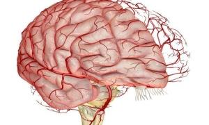 Укрепление сосудов головного мозга