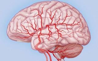 Особенности мозгового кровообращения