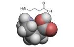 Гамма-аминомасляная кислота (ГАМК): что это, функции, синтез