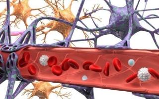 Гистология гематоэнцефалического барьера