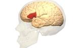 Центр Брока и зона Вернике в мозге