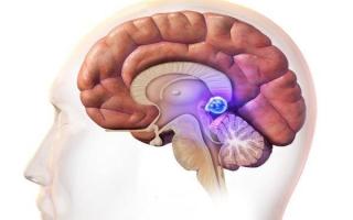 За что отвечает шишковидная железа головного мозга