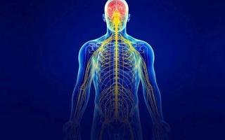 Восходящие и нисходящие пути спинного мозга