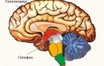 Физиология гипоталамо-гипофизарной системы
