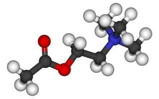 Что такое ацетилхолин