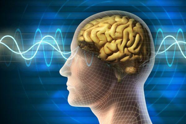биоактивность мозга