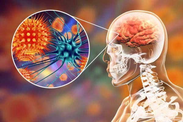 вирус в мозге