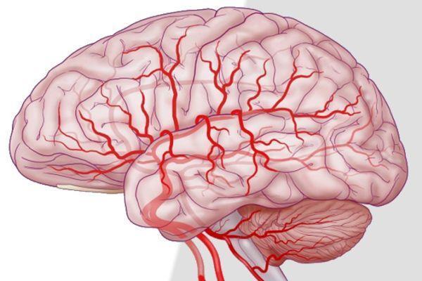 кровоснабжение мозга
