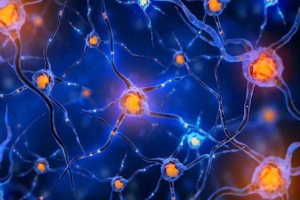 нейрональные связи