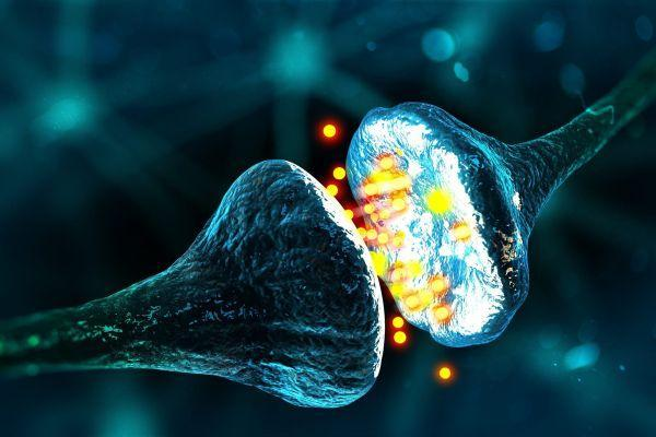 взаимодействие нейронов