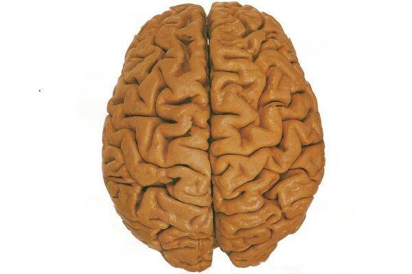 большие полушария мозга