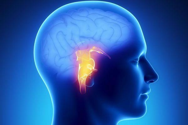 патология в мозге