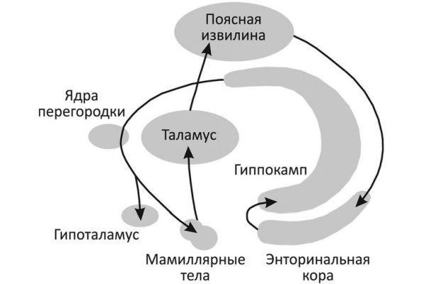 круг Пейпеца