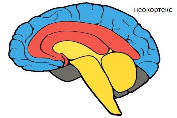 мозг схема