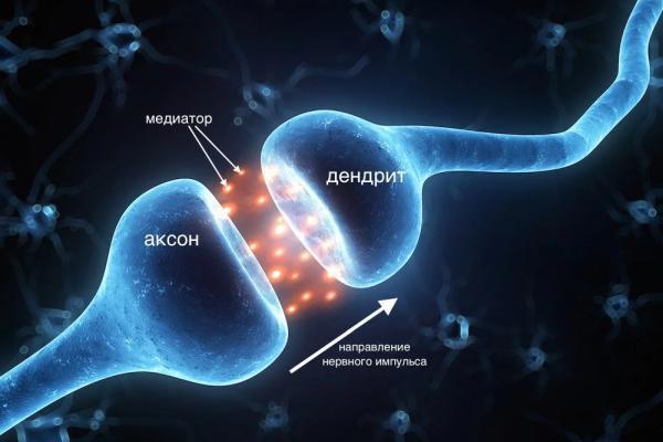 синаптическая связь